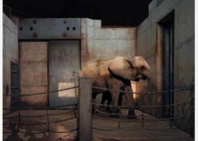 Elephants, Metro Toronto Zoo January 1985