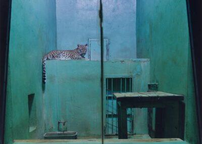 Leopard, Usti, Czechoslovakia, 1992