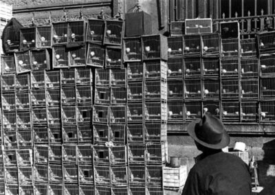 Cages with song birds, from Shanghai 1949: The End of an Era, 1949
